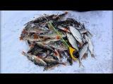 Вот это рыбалка! Бешеный клёв окуня и плотвы! Пожалуй, самая лучшая зимняя рыбалк...