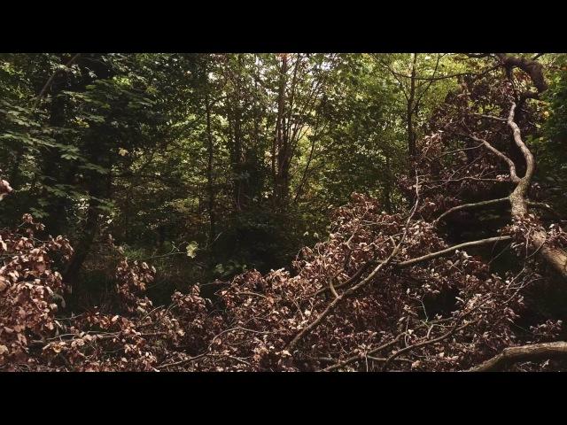 Testing the DJI Mavic Pro through the woods