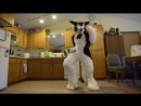 Rinn - Get Lucky [David A. Remix] (Daft Punk_David A.) Sergal Fursuit Freestyle (30.03.15)