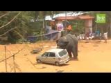 слоняра нажрался и буянит