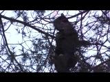 Операция по спасению кота, который 2 дня провел на дереве