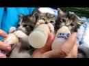 Маленькие котята, милашки сосут молочко