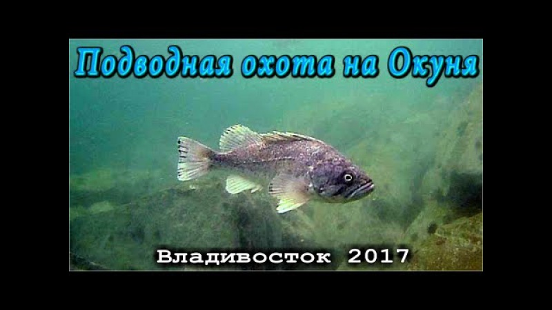 Подводная охота. Владивосток 2017. Охота на морского окуня.