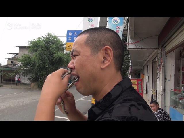 Мастер кунг-фу Ву Сун выполняет трюки со змеями