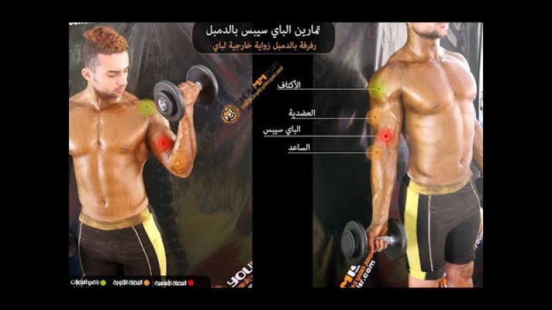 افضل تمارين تضخيم عضلة البايسيبس رفرفة با16
