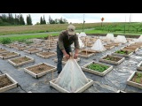 ВЫРАЩИВАНИЕ КАРТОШКИ ПОД ПИРАМИДАМИ - СОЛЯРИЯМИ. НАЧАЛО. Starting Potatoes Under a Solar Pyramid Cloche: This Agrarian Life Episode #39