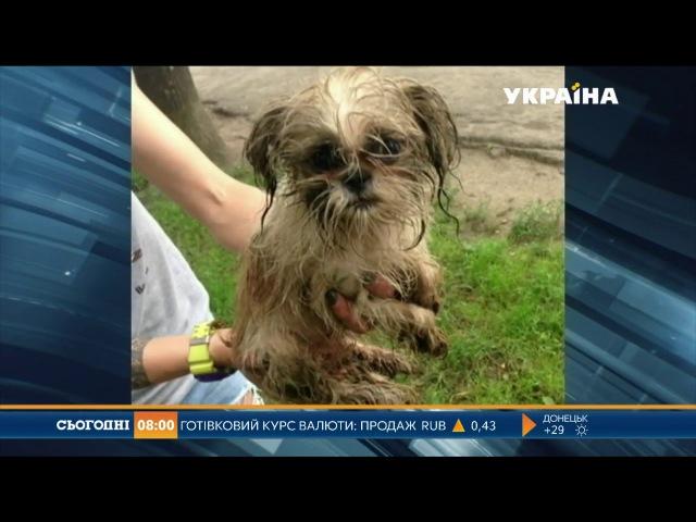 Два десятки тварин і птахів загинули у пожежі в Івано-Франківську