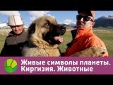 Живые символы планеты. Киргизия. Животные Живая Планета