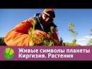 Живые символы планеты Киргизия Растения Живая Планета
