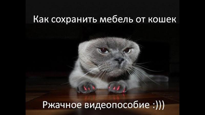 Как правильно наклеить коту антицарапки. Смешное видео про кота