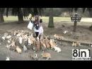 Остров диких кроликов Окуносима, Япония Island of wild rabbits Okunosima, Japan