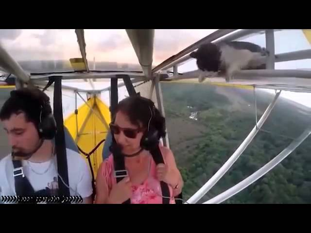 Кот на крыле дельтаплана