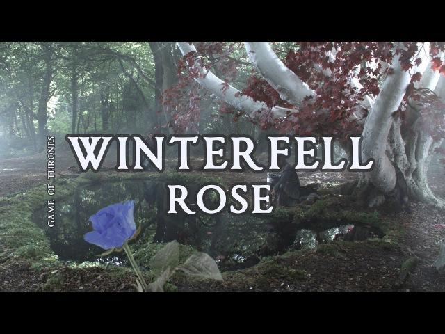 Роза Винтерфелла - The Starlings