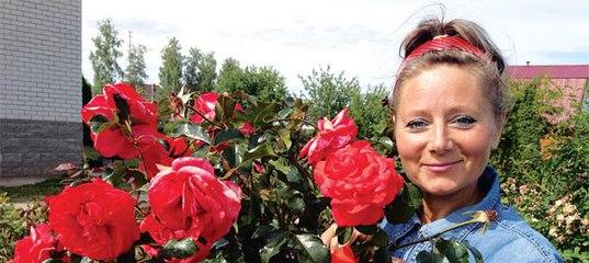 Питомник иващенко розы