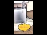 Очищение воздуха.mp4