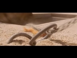 Gladiator Theme  Now We Are Free  Hans Zimmer  Lisa Gerrard - YouTube
