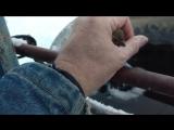 Житель американского штата Айдахо спас примерзшую птицу
