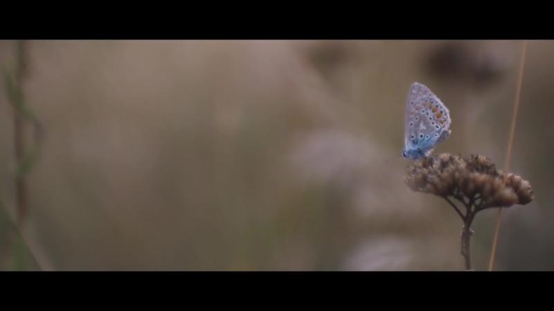Fluturi Pe Asfalt - Nu crezi că pot؟