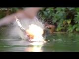 Если бы Майкл Бэй снимал документальные фильмы про животных