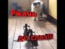 Ржачь Утята напугали кота