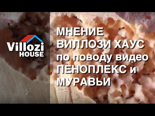 Мнение ВИЛЛОЗИ ХАУС по поводу видео ПЕНОПЛЕКС и МУРАВЬИ. Виллози Хаус - мы строим теплые дома.