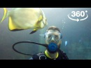 В Сочи скормили акулам популярного блогера Видео 360