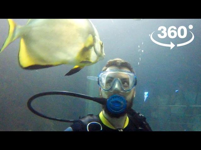 В Сочи скормили акулам популярного блогера [Видео 360]
