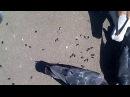 Огромная стая голубей прямо у ног!))КОРОТКО!))