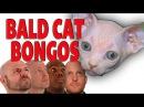 Bald Cat Bongos