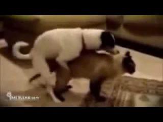 Порно Секс Приколы с Животными, Порно собак с кошками! Dog Cat really fuck! See Sure!