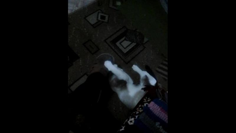 как наша собака играет с Женечкиным тапком