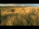 BBC Тайная жизнь птиц Хор на рассвете 2010 BDRip 720p