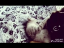 бой собака против котёнка