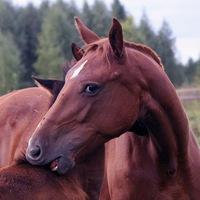 Суставные подкормки для лошади как жить после эндопротезирования сустава