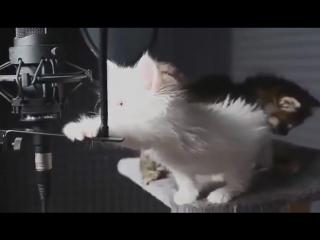 Котята поют очень няшно