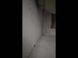 Мой попугай спалил камеру и убежал 😂😂😂