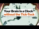 How Your Amazing Brain Tells Time Circadian Watch, Pattern Pendulum, Tempo Timer Dean Buonomano