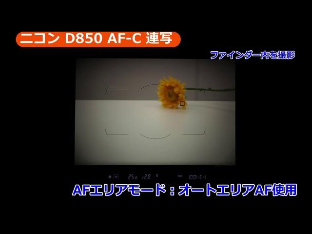 ニコン D850 オートフォーカス/AF-C&連写(カメラのキタムラ動画_Nikon)