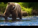 Классный фильм Дикая природа Аляски Бурые медведи Nat Geo Wild