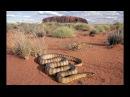 Самые опасные животные в мире! От пустыни до саванны. Дикая природа. National Geographic.