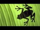 Fake - Frogs In Spain (2017 Ext.-DW Remix-By Marc Eliow) HD