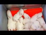 Новинка.Калифорнийский кролик.Там такое!!!Детский дом.Фильм-29