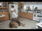Unbelievable living with lions and tigers at home as a best friends