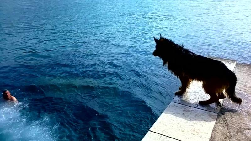 Чефалу. Собака прыгает в море.