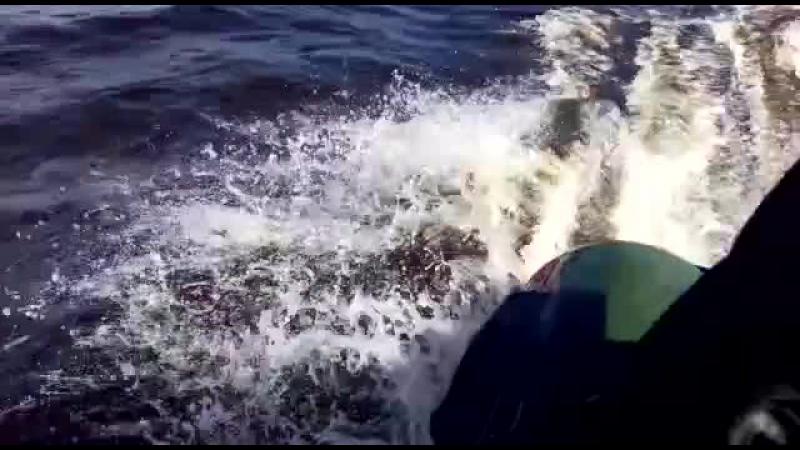 Озеро Аятское, лодка МНЕВ Кайман 330, мотор SeaPro OTH 9.9 S (15 л.с)
