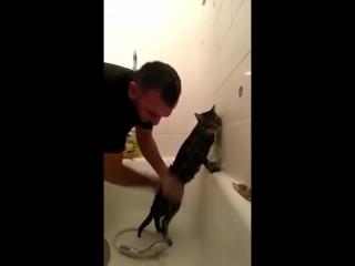 Самый терпеливый в мире кот — так его прозвали в Сети.