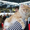 "Питомник""Beautiful cat"", котята мейн кун."