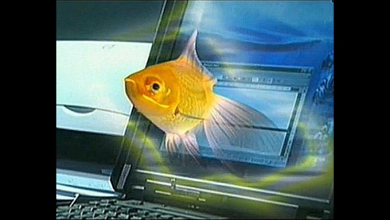 Джек-пот для золушки . Золотая рыбка