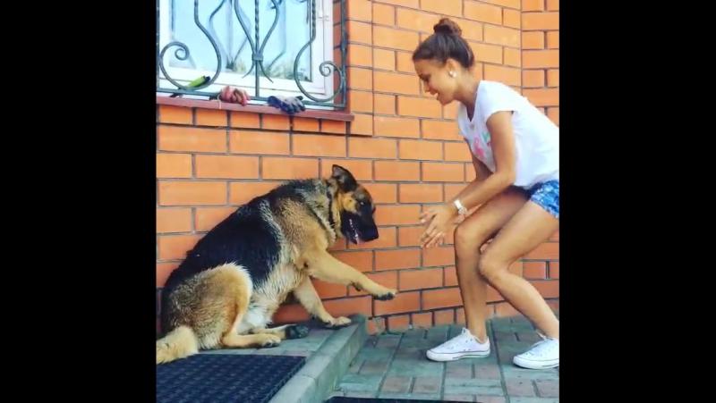 Плохая имитация сокрытия ужаса от общения с собакой