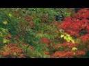 Осень. Gogi Chlaidze (Гоги Члаидзе ) музыка из фильма Garigeba(Сделка)